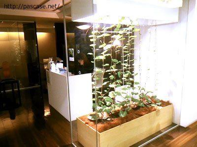 パソナグループ本部3階の観葉植物