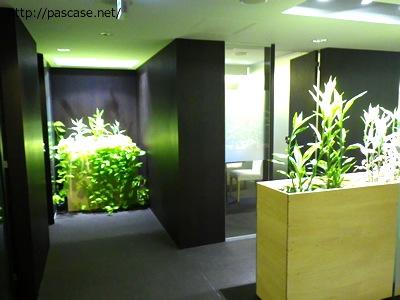 パソナキャリア本部3階、廊下にも観葉植物があります